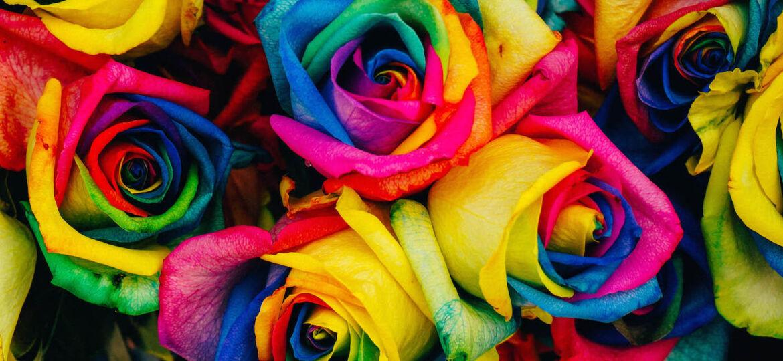 Florida Gay Marriage Laws Blog Post